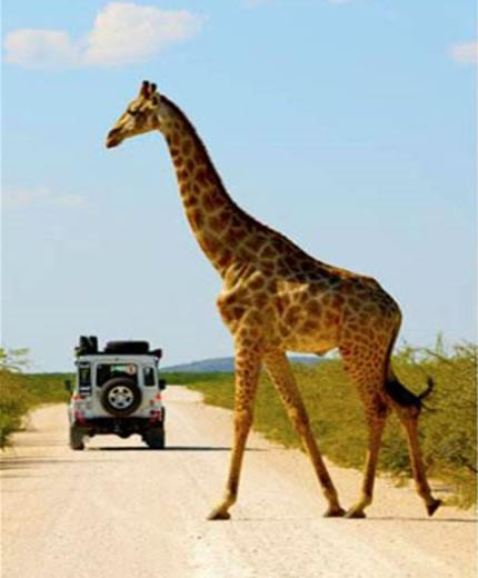 环球哥非洲旅行之交通工具篇